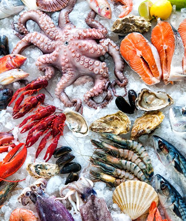 Fisch|Meeresfrüchte