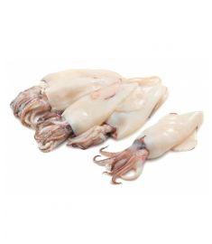 Calamari 6Kg Ganz Geputzt Patagonien IQF